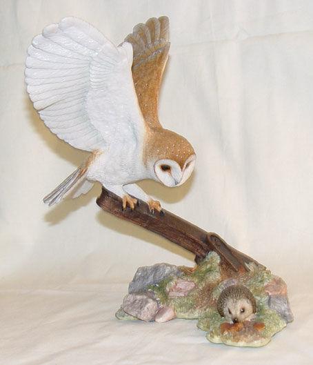 Image de Barn Owl