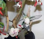 Image de Colibri - Tropical paradise