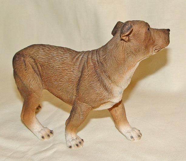 Image de Staffordshire Bull Terrier Dog