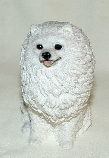 Image de Dog - Pomeranian