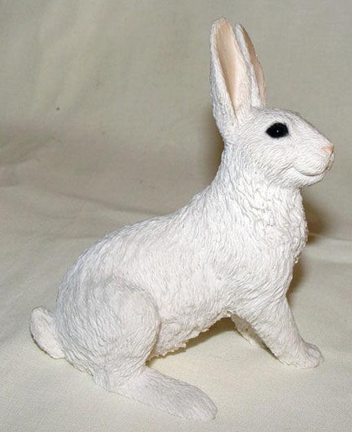 Image de Hare