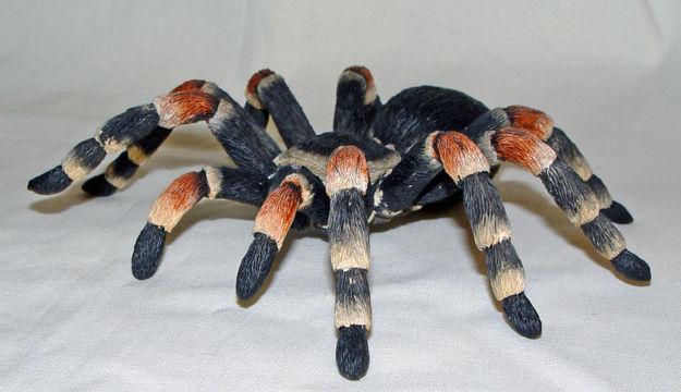 Image de Mexican Tarantula