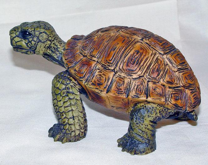 Image de Turtle