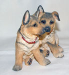 Image de Alsatian Puppy - German Shepherd